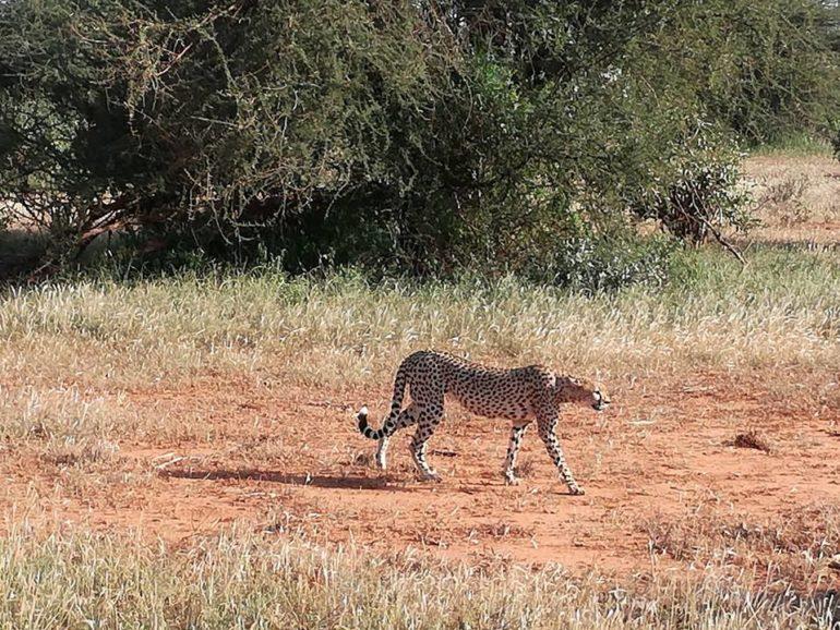 Safari Park National, Tsavo Est