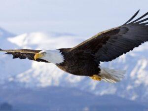 La Vera Libertà: Coscienza ed Energia insieme