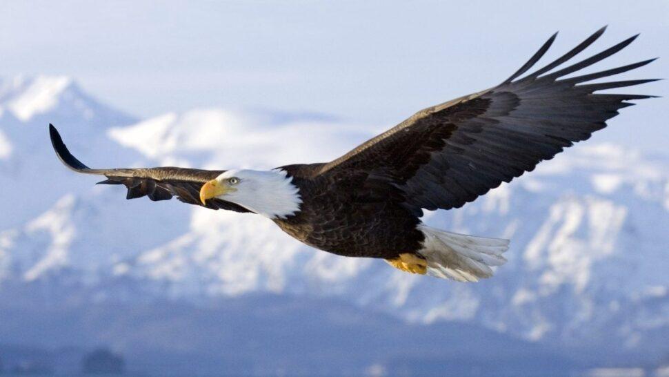 La vera libertà coscienza ed energia insieme